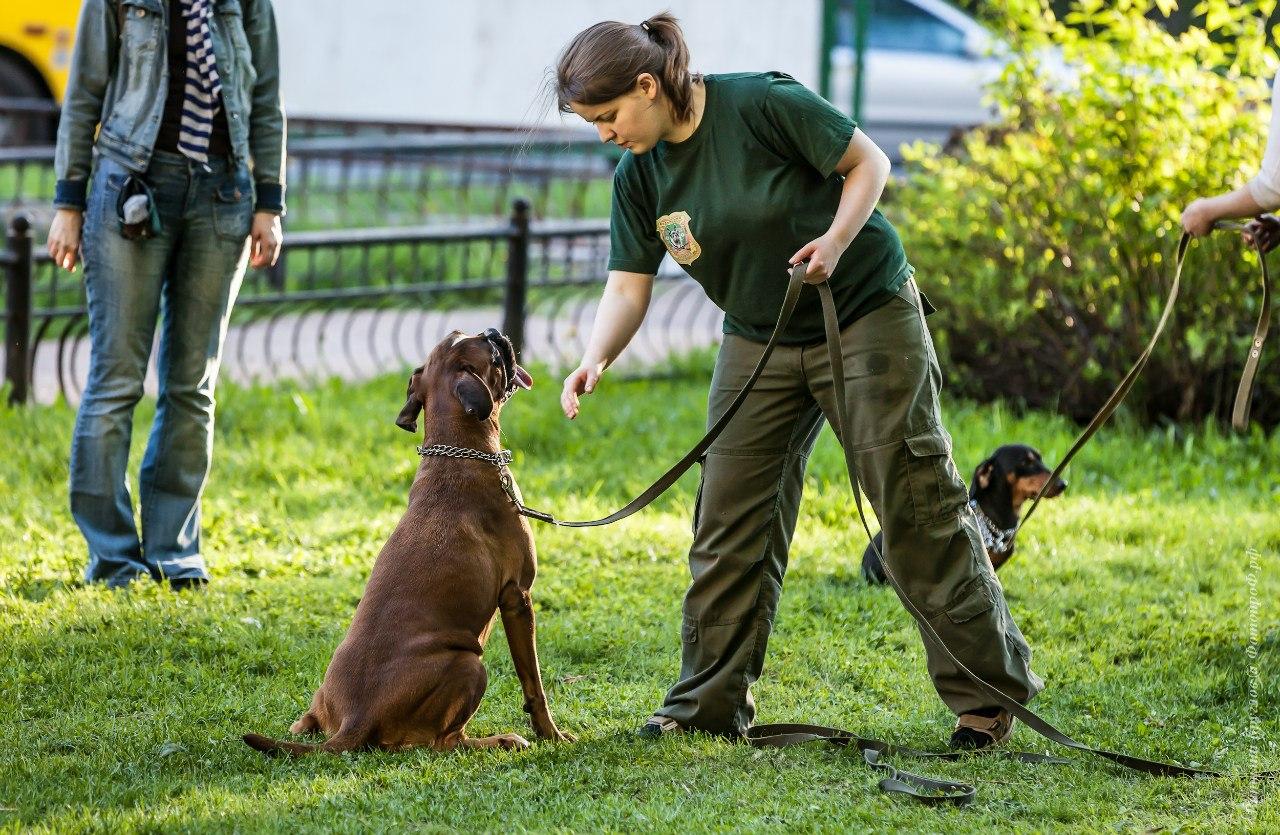 Картинки по запросу ссировка собак: правила дрессировки, дачи лакомства, расчет времени