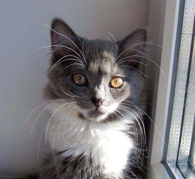 Как кошки используют свои усы Cats, nature photography