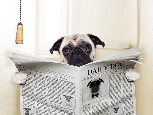 Часто причина поноса – кормление собаки жирными, острыми, сладкими блюдами или молоком, которое нельзя давать некоторым породам