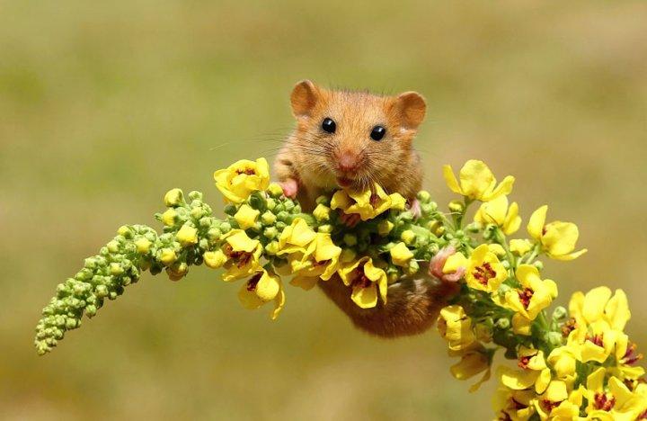 фотографии крошечных и забавных диких мышек (5)