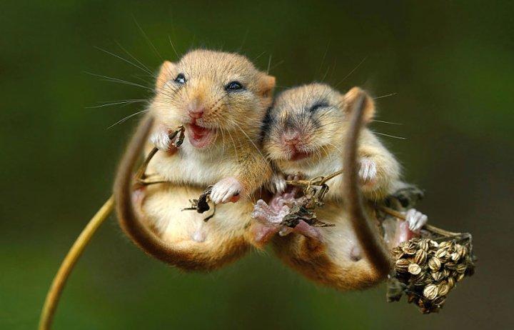 фотографии крошечных и забавных диких мышек (7)