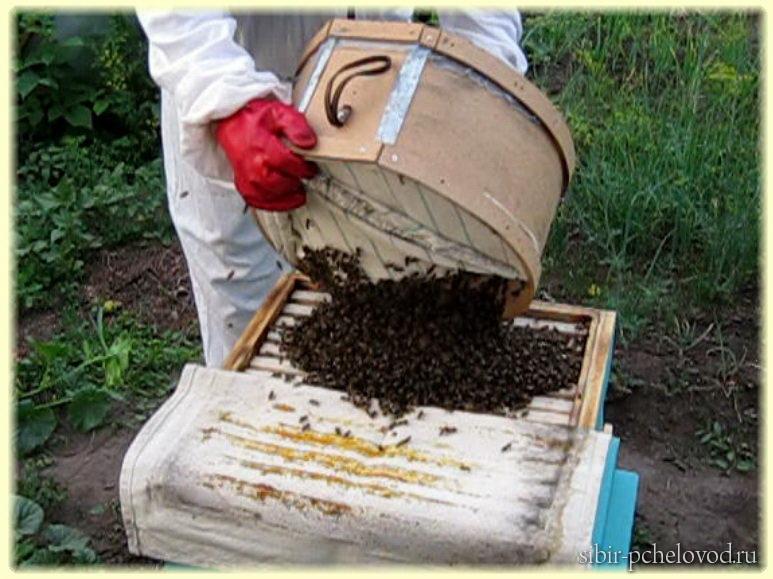 Как сажать пчел в новый улей 21