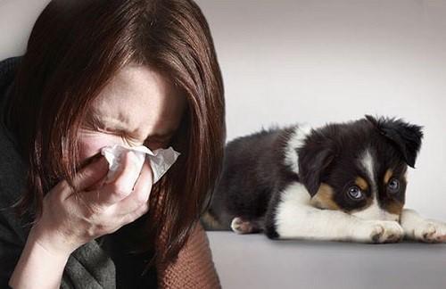 Картинки по запросу Аллергия на собачью шерсть