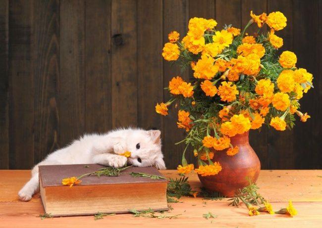 Белая кошка - очень ранима и чутко реагирует на критику