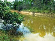 Водные растения не являются характерной чертой вод в местах обитания.