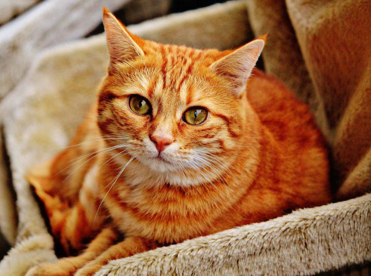 cat-1046544_1920-730x543