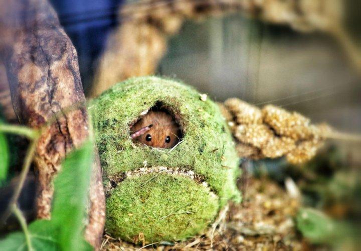 фотографии крошечных и забавных диких мышек (11)
