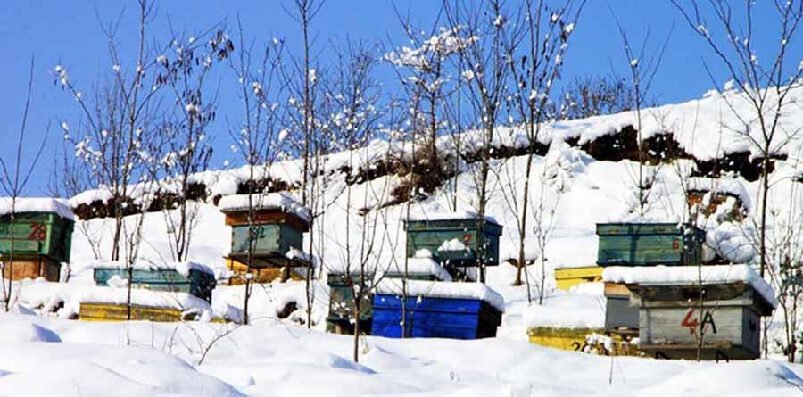 Пчелиные улья на снегу