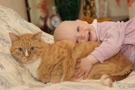 Соблюдение правил защити малыша и обезопасит животное