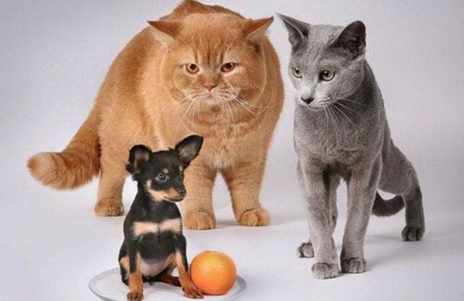 Ученые: Кошки никогда не станут лучшими друзьями человека