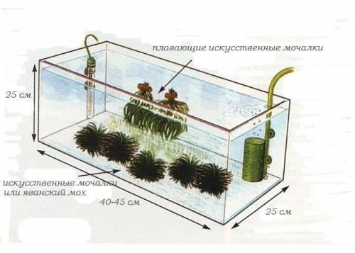 Нерестовый аквариум для Inpaichthys kerri.