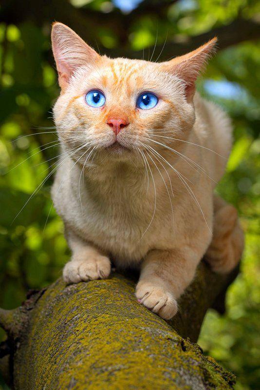 Сделала глаза как у кота из шрека