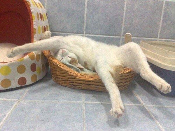 27 котов, уснувших в самых неподходящих местах  кот, сон