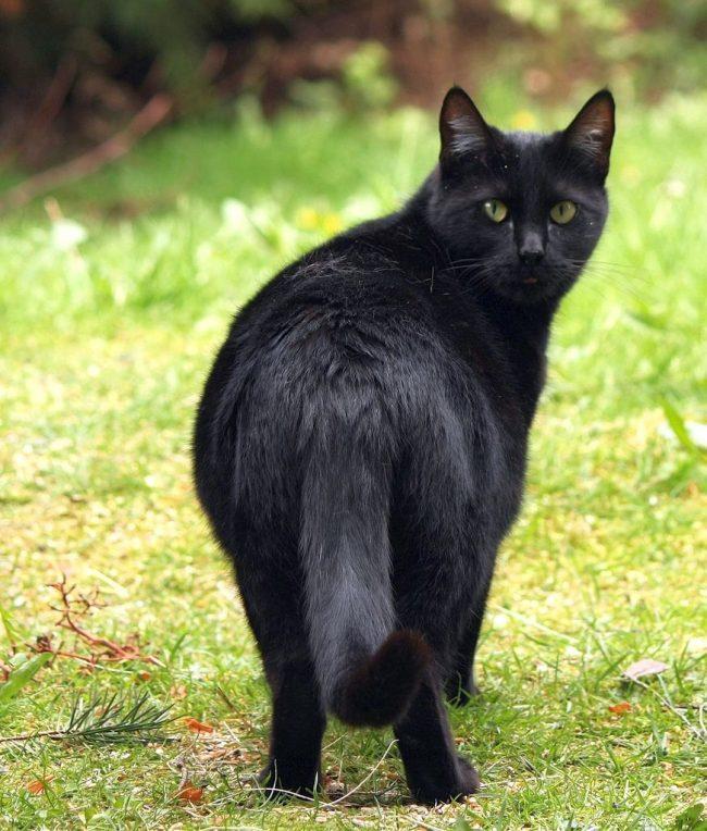 Беременной кошке запрещено давать какие-либо лекарства, кроме некоторых исключительных случаев, когда она чем-то заболела. И то, в такой ситуации обязательно обращайтесь за консультацией к ветеринару