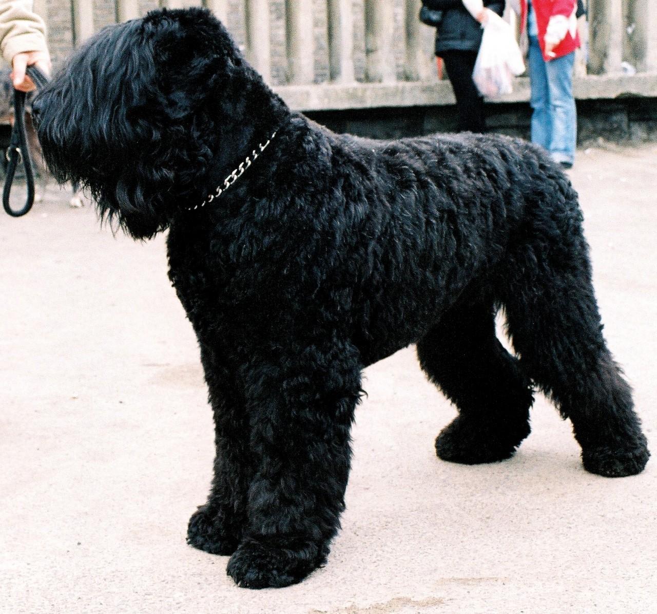 7 знаменитых пород собак, выведенных в России россия, собаки