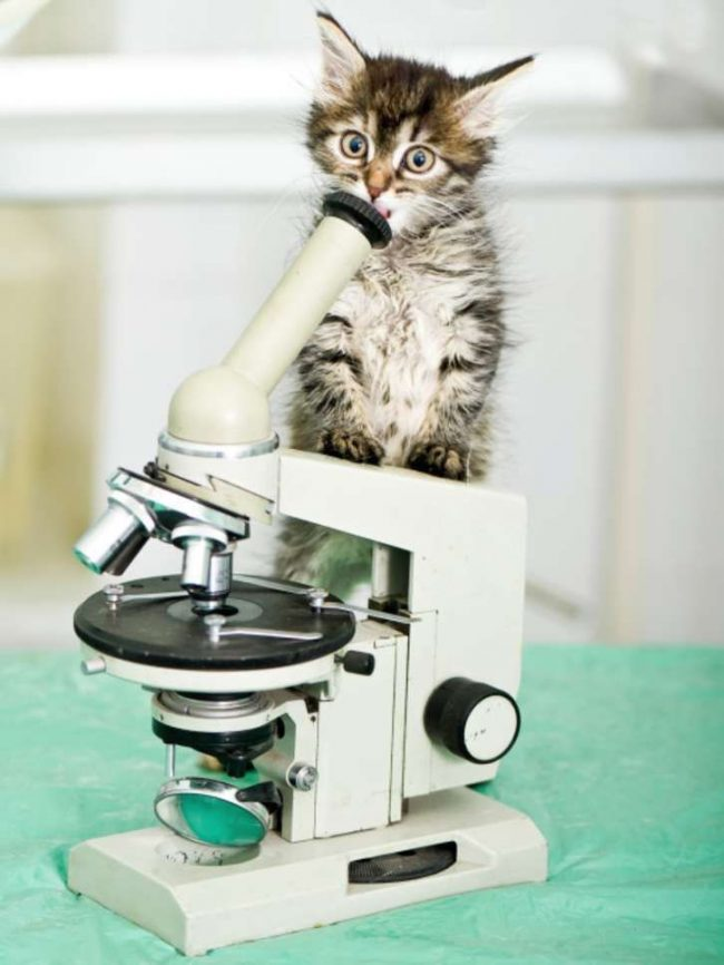 Лучше всего прививки котятам делать в ветеринарных клиниках, где специалисты могут взять на себя ответственность за жизнь и здоровье вашего питомца