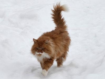 Что делать, если убежала кошка?