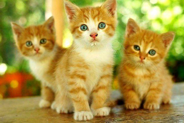 Нежные и беззащитные рыжие котята
