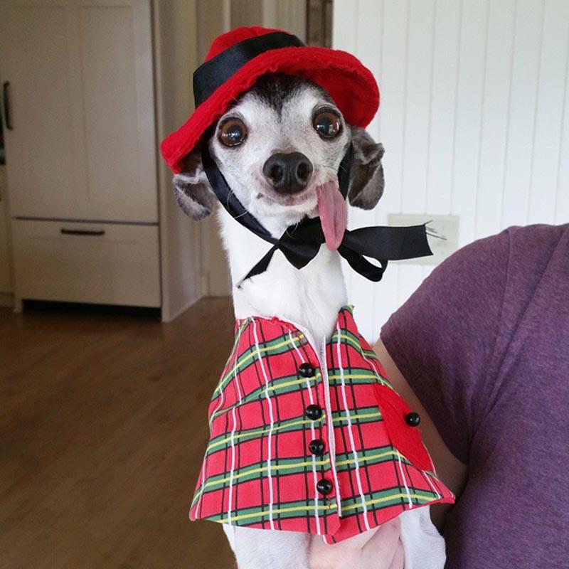 derpy-dog-greyhound-sticking-tongue-zappa-110