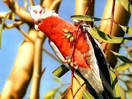 Уставший попугай сядет на ветку дерева