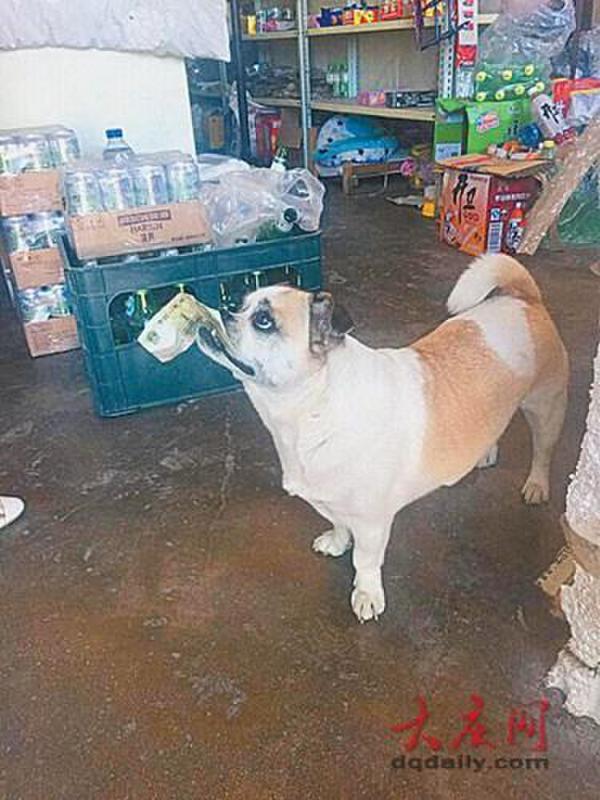 В Китае пес самостоятельно ходит в магазин за колбасой