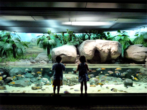 Выбо аквариума для ребенка