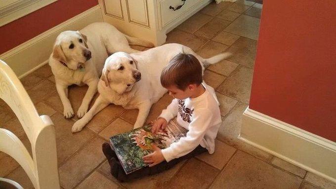 16. Они всегда готовы внимательно выслушать каждого, кому это нужно животные, лабрадор, собаки