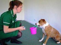 С помощью кликера собаку можно научить не только командам, но и забавным трюкам