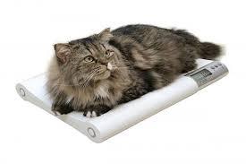 Вес кошки