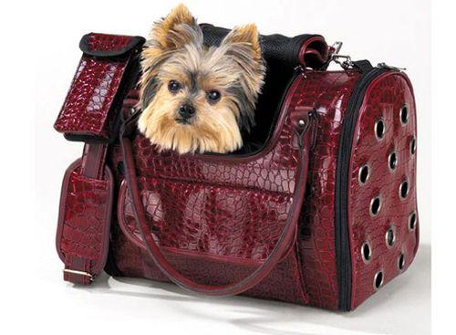 Картинки по запросу Выбираем переноску для собаки