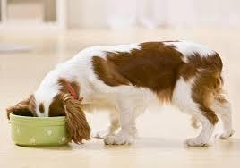 Приучаем собаку к порядку