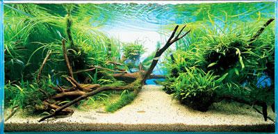 природное оформление аквариума