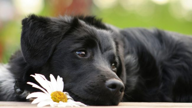 Сколько длится течка у собак