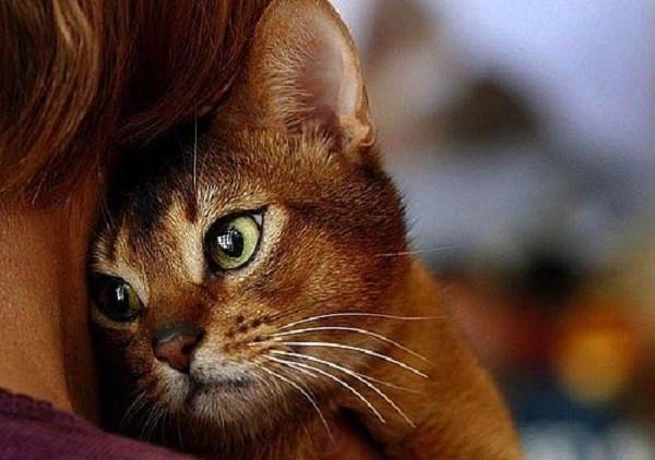 Как вылечиться с помощью кошки? животные, коты, факты