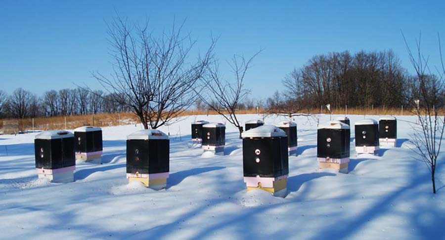 Пелиные улья зимой среди снега