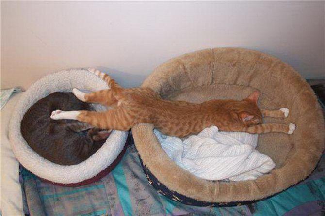 25 самых странных поз, в которых спят коты коты, сон, поза