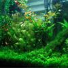 Расположение растений в аквариуме