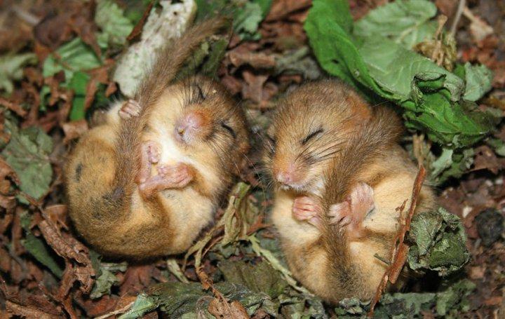 фотографии крошечных и забавных диких мышек (3)