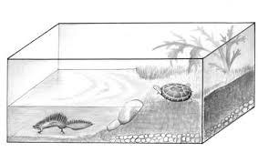 Вариант аквариума болотной для черепахи