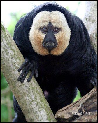 25 самых необычных животных в мире! (25 фото + описание)