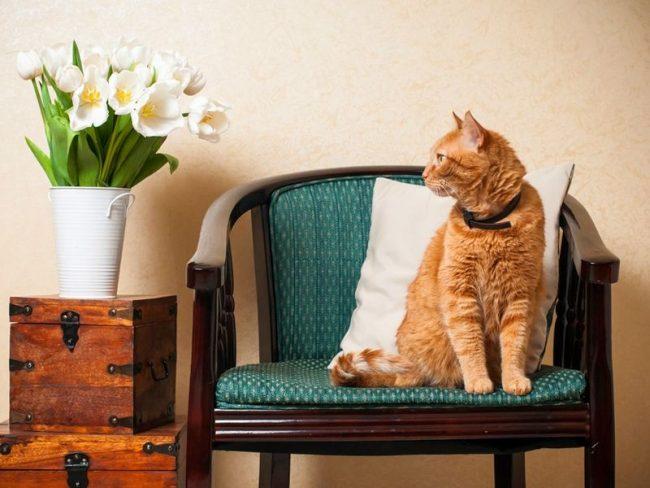 Рыжие коты приносят радость и счастье своим хозяевам