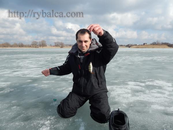 Алексей Лисица окунь на мормышку