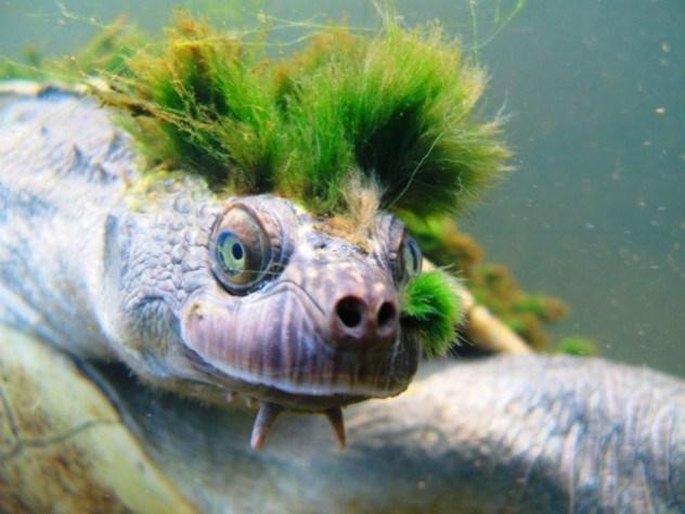 11 причудливых пород черепах