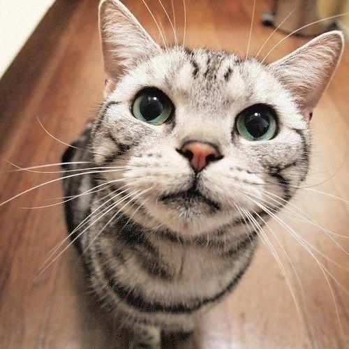 Как отучить кота гадить в доме