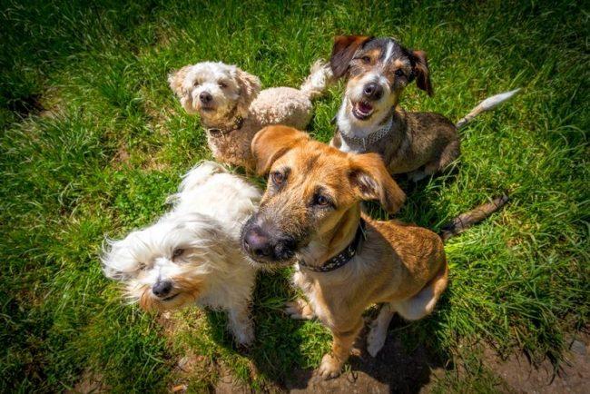 Также лишай передается при контакте с больными собаками