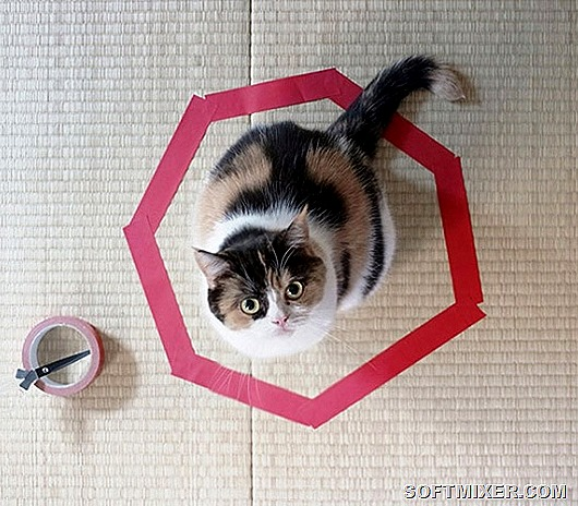 10038210-R3L8T8D-650-how-to-trap-a-cat-circle-3-1