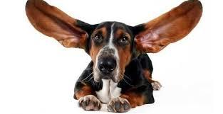 Заболевания ушей у собак