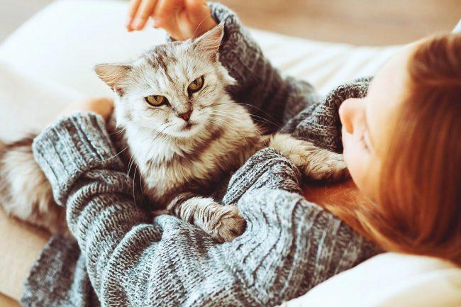 Гладить любимого кота и слышать его довольное мурлыканье - что может быть лучше после долгого трудового дня?