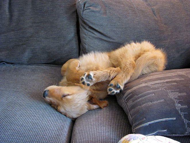 15 собак, которые невероятно устали собаки, позитив, животные
