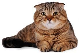 Кошка с признаками ожирения
